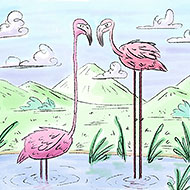 Flamingos Illustration